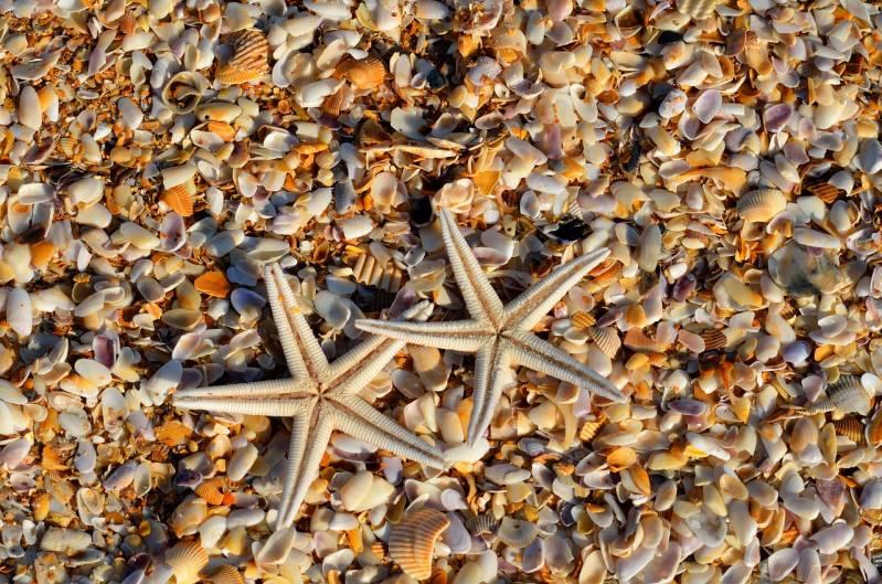 starfish 1572797_1280
